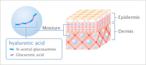 ultimate cocktail facial serum_organic-radiance-skincare_hyaluronic acid diagram helps pull moisture nutrients into skin